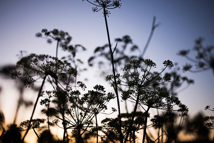 mh-blog-wild-garden-01