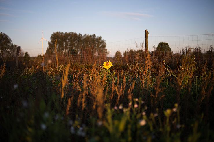 mh-blog-wild-garden-04