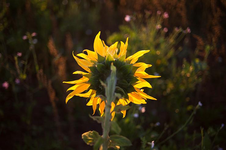 mh-blog-wild-garden-11