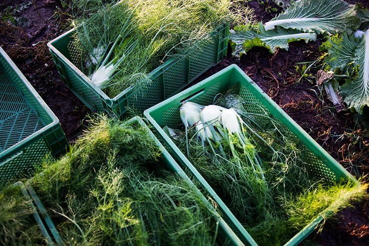 mh-blog-wild-garden-14