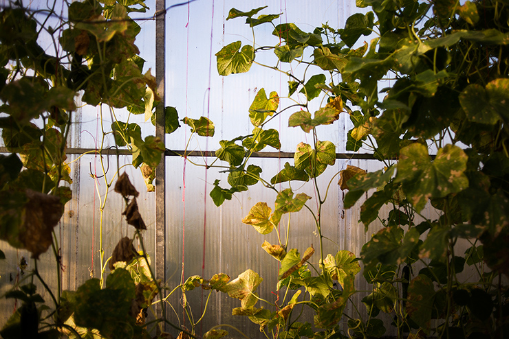 mh-blog-wild-garden-29