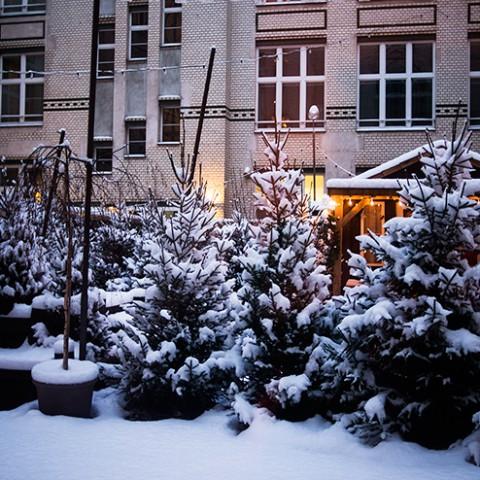 mh-blog-christmas