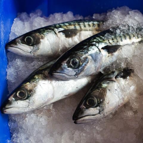 fishheads-blog